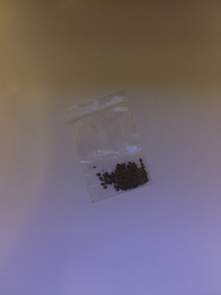 A small plastic baggy filled with about 75 very tiny brown seeds, on a white background.